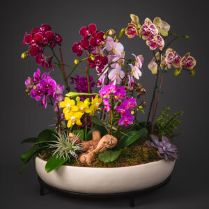 Flowering Plant Arrangement