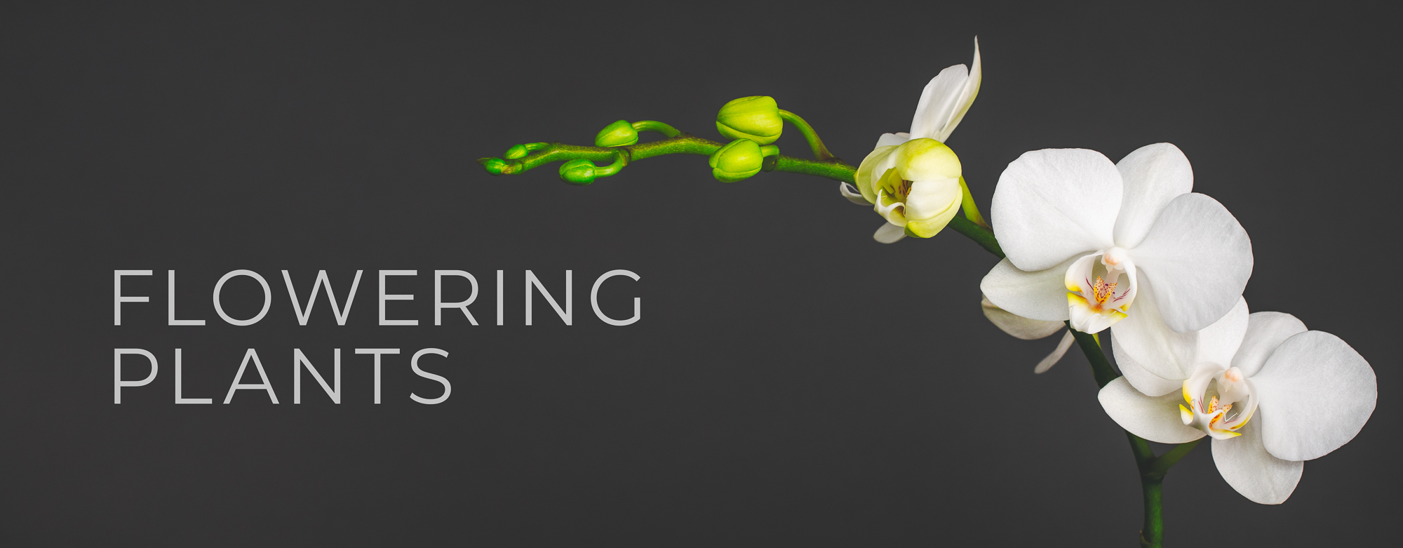 flowering plants header